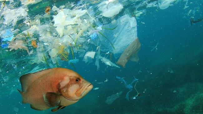 Hậu quả của rác thải sinh hoạt