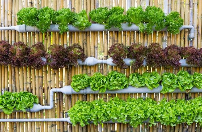 Hướng dẫn cách trồng rau sạch không cần đất