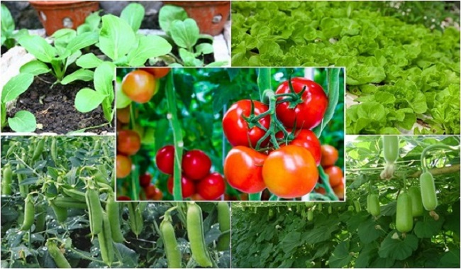 Lịch trồng rau theo các tháng trong năm