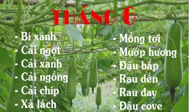 Lịch trồng rau trong năm