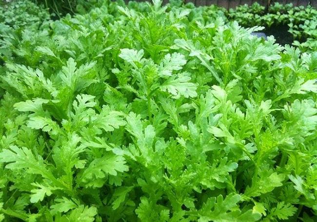Những loại rau dễ trồng