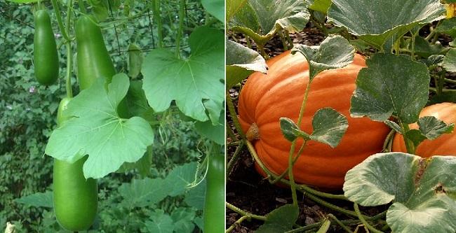 Mùa hè trồng rau gì?